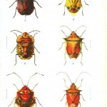 Animal - Insect - Beetles