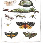 Animal - Insect - Butterflies 1782 -   (2)