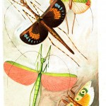 Animal - Insect - Flying insects