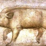 Animal - Range and farm - Boar, Italian drawing
