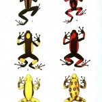 Animal - Reptile - Frogs, colored