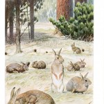 Animal - Woodland - Rabbits in a field