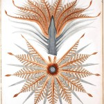 Botanical - Educational plate - Cycad anatomy