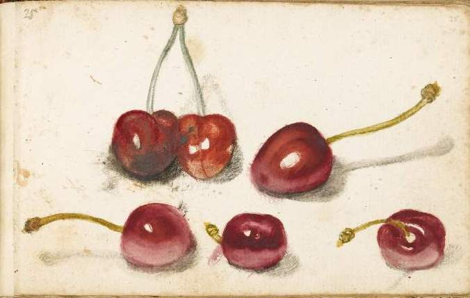 Botanical - Fruit - Cherries, drawing, Italian