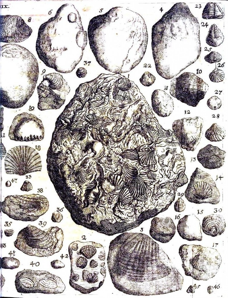 Engraving - Fossils 2