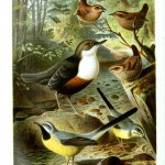 Animal - Birds - Birds in a hardwood forest