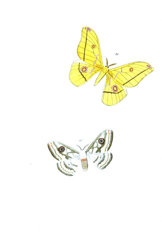 Animal - Insect - Butterflies - Moth 15