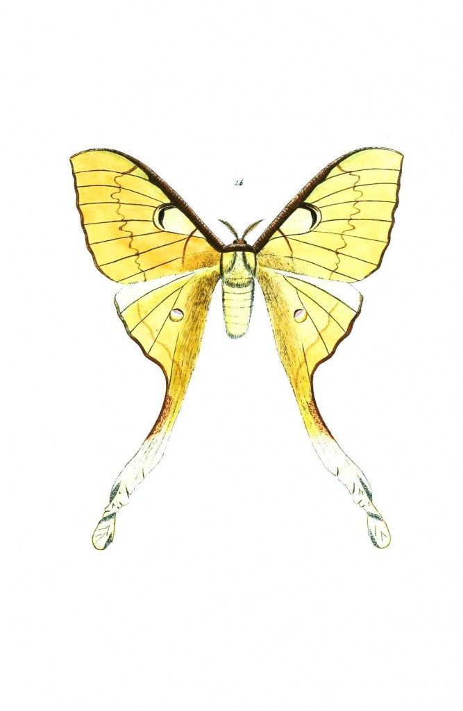 Animal - Insect - Butterflies - Moth 19