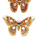Animal - Insect - Butterflies - Moth 21