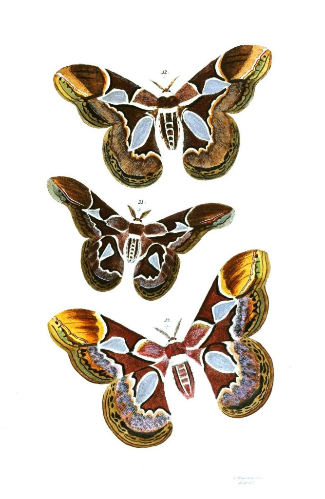 Animal - Insect - Butterflies - Moth 22