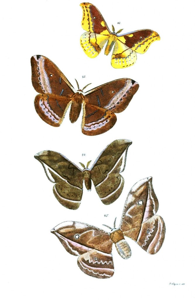 Animal - Insect - Butterflies - Moth 25