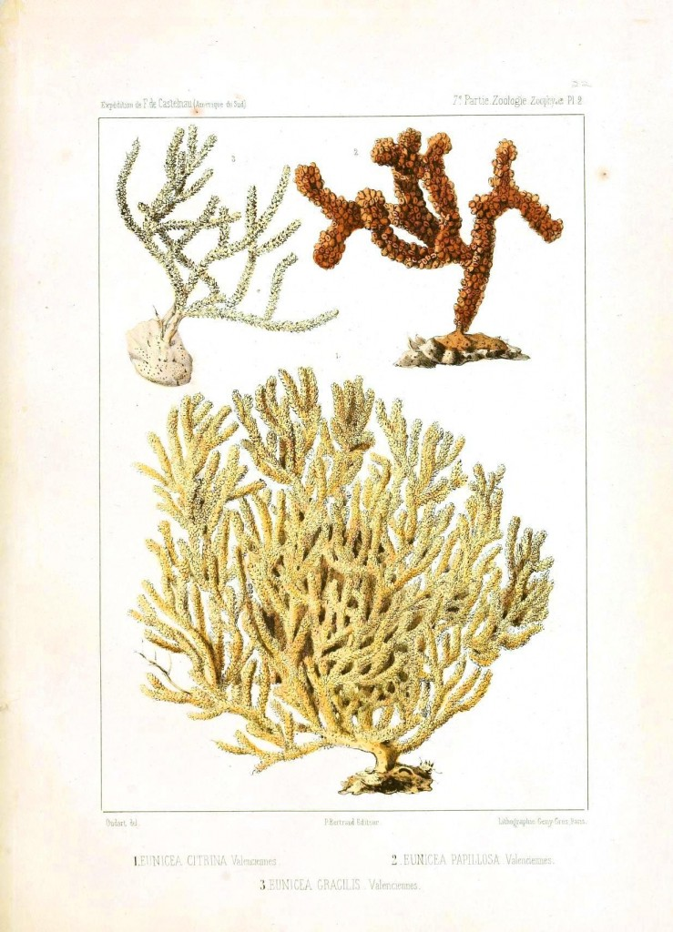 Animal - Sea Shell - Coral types