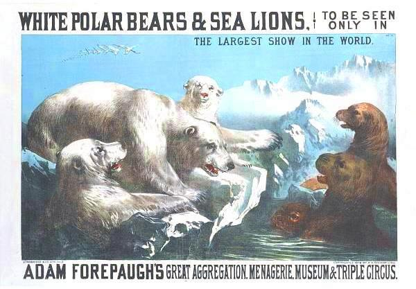 Art - Advertisement - Circus - White polar bears and sea lions