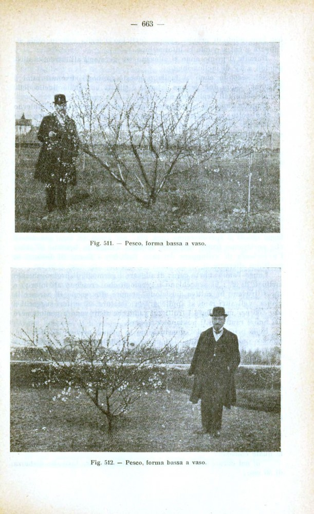 Landscape - Photo - Orchard, with man