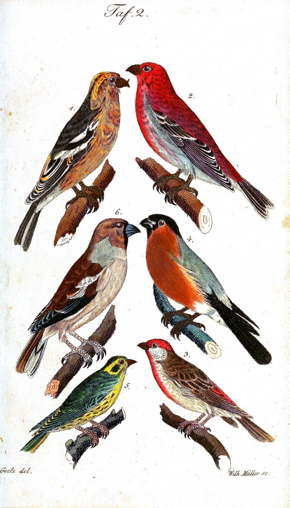 Animal - Bird - Birds, colorful, plate 2