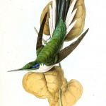 Animal - Bird - Birds of Brazil 11
