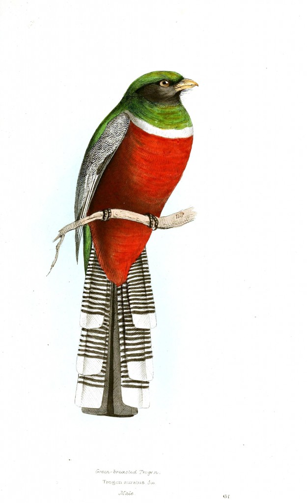 Animal - Bird - Birds of Brazil 17