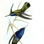 Animal - Bird - Birds of Brazil 6