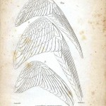 Animal - Bird - Educational plate - Bird wings