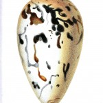 Animal - Bird - Egg, speckeled green and brown