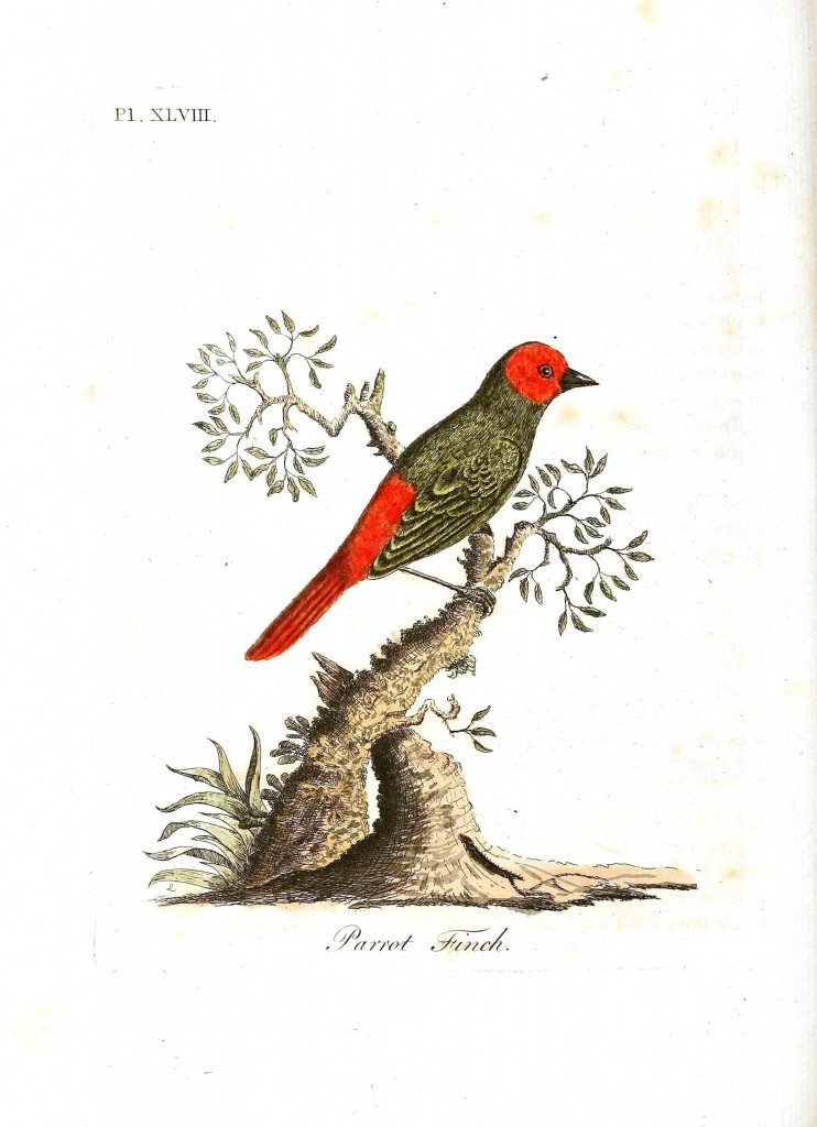 Animal - Bird - Parrot finch