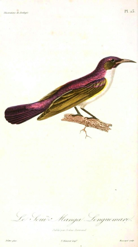 Animal - Bird - Pink and brown