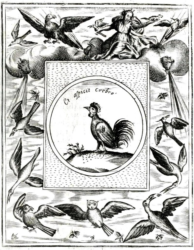 Animal - Bird - Rooster emblem with birds eating bugs