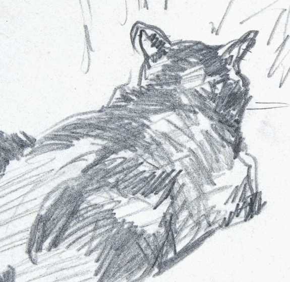 Animal - Cat - Cat resting, drawing