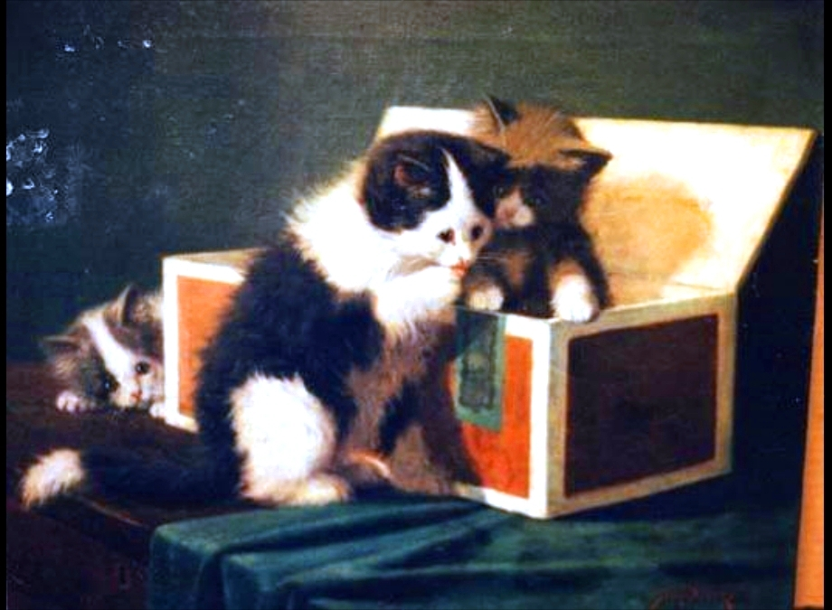 Animal - Cat - Kittens playing in a box