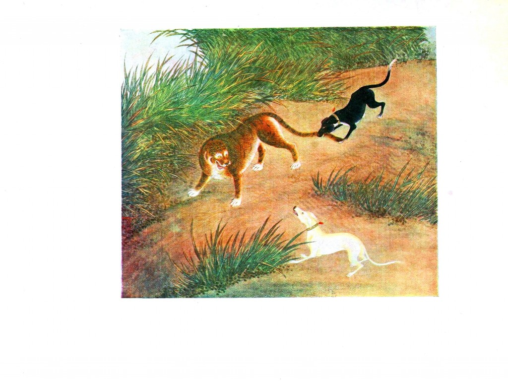 Animal - Dog - Dog chasing tiger, Asian