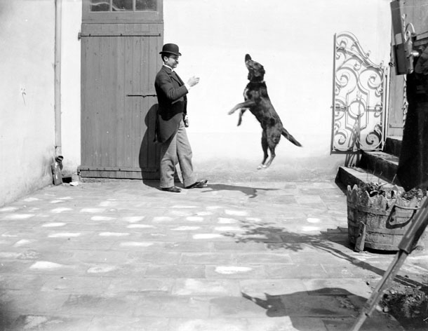 Animal - Dog - Dog jumping mid-air, photo
