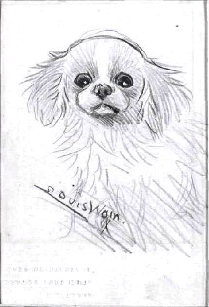 Animal - Dog - Louis Wain sketch of dog