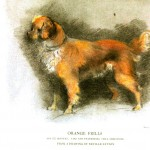 Animal - Dog - Orange frills