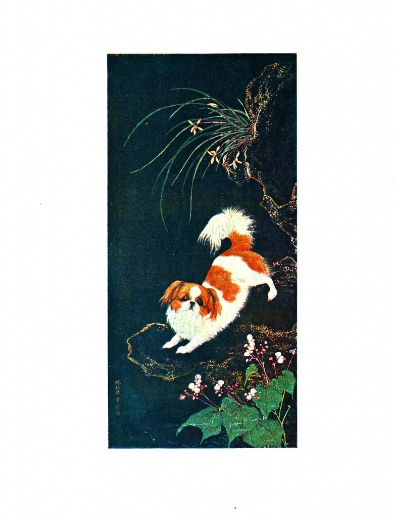 Animal - Dog - Pekinese, Asian 3