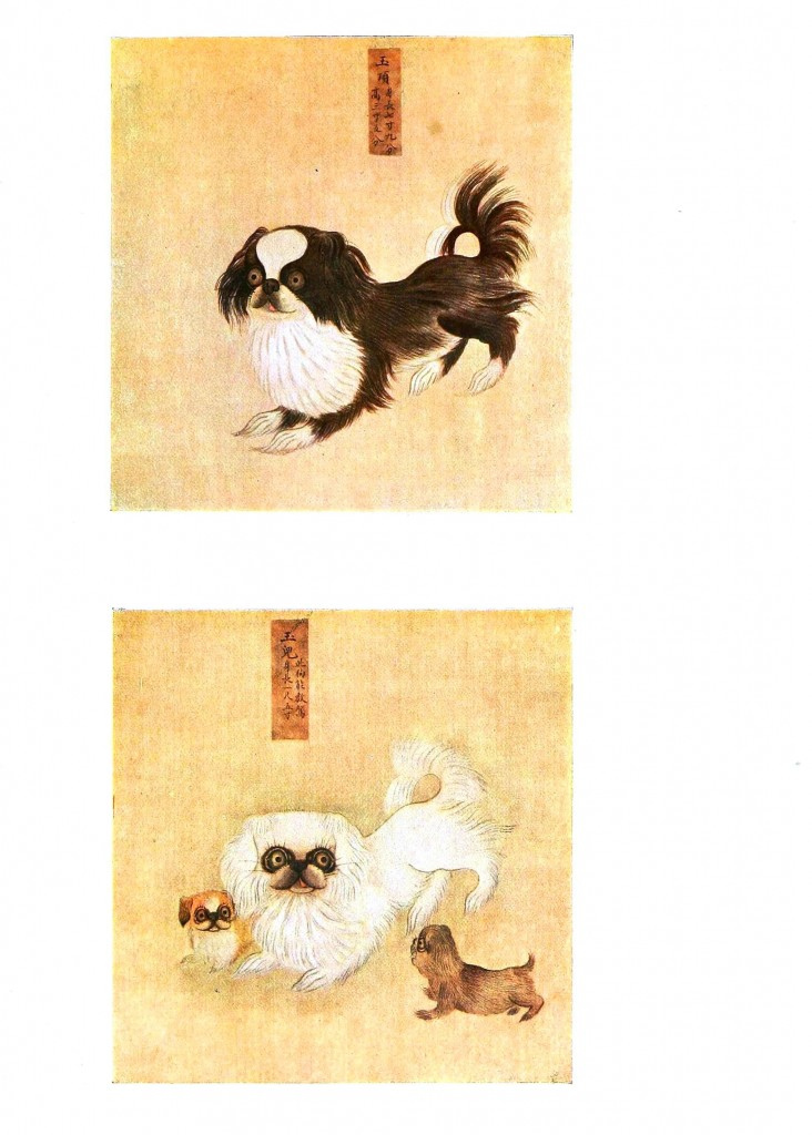 Animal - Dog - Pekinese, Asian