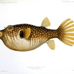 Animal - Fish - Beige spotted 2