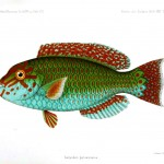 Animal - Fish - Blue-green 3