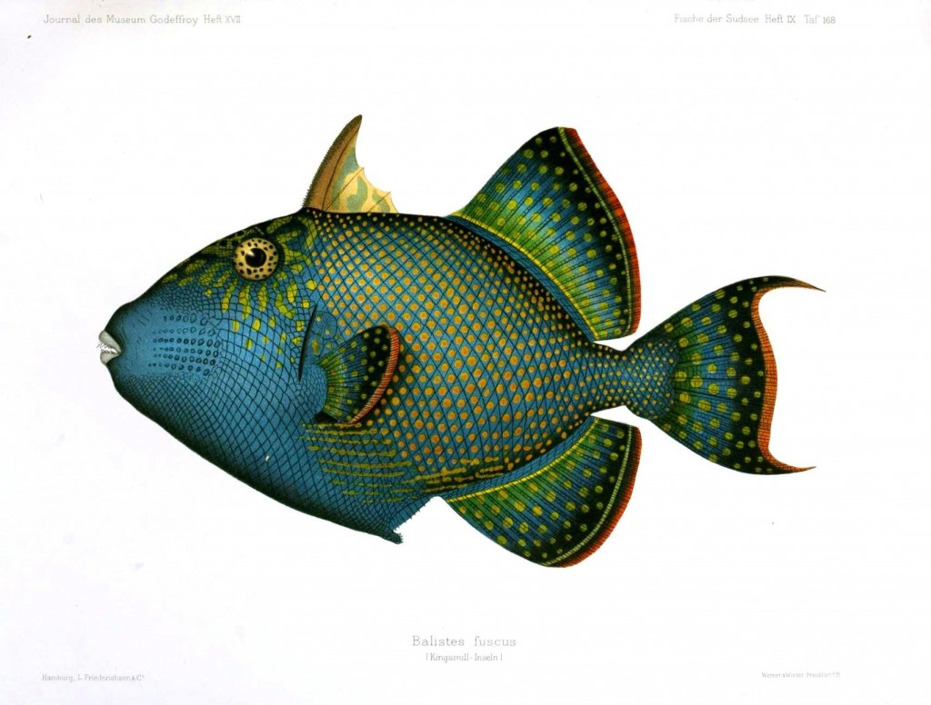 Animal - Fish - Blue-green 5