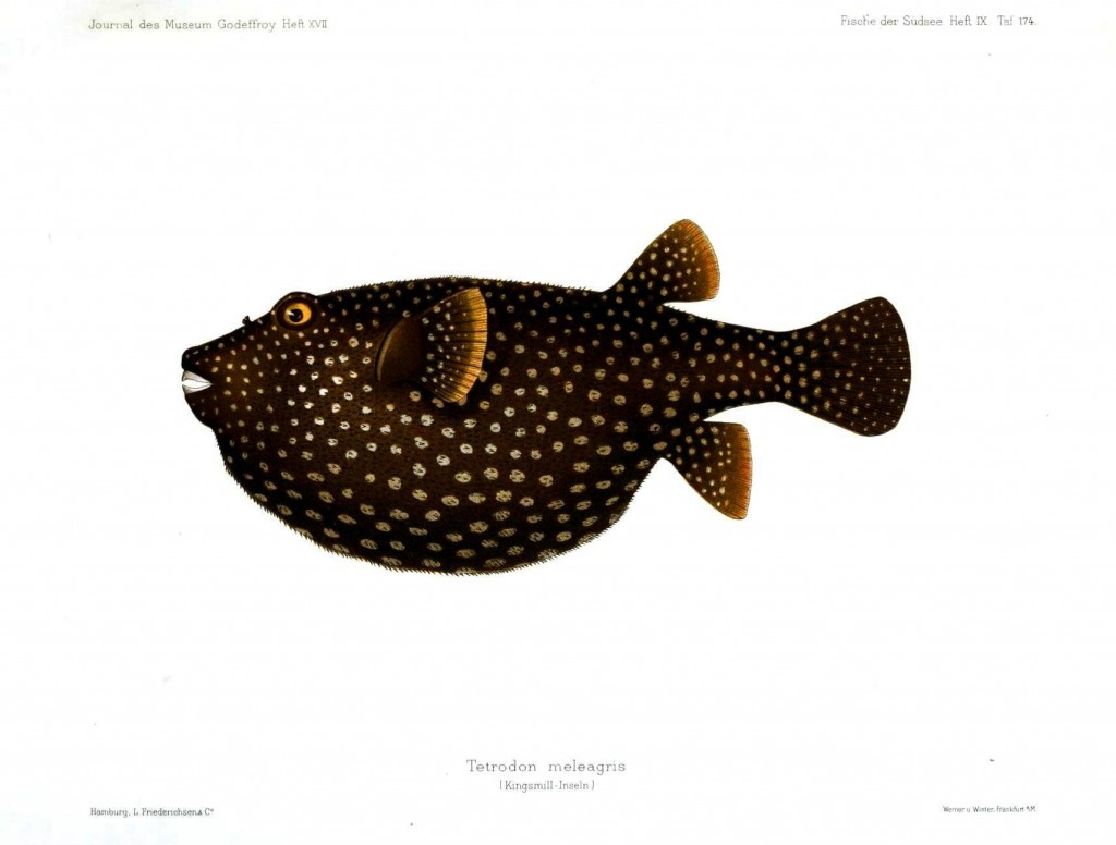 Animal - Fish - Brown and beige spots