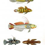 Animal - Fish - Fish with fins, various