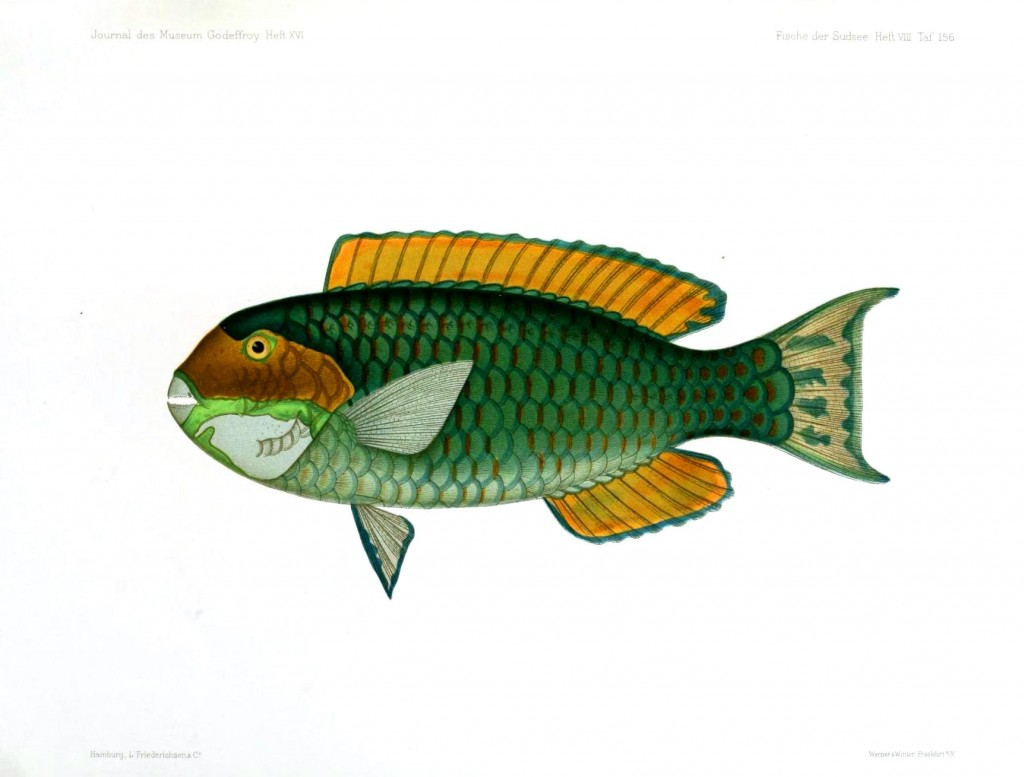 Animal – Fish | Vintage Printable at Swivelchair Media – Beta