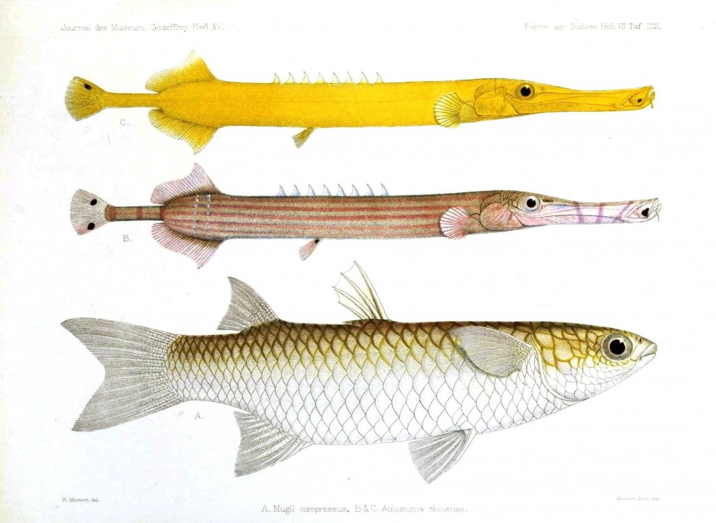 Animal - Fish - Long yellow fish