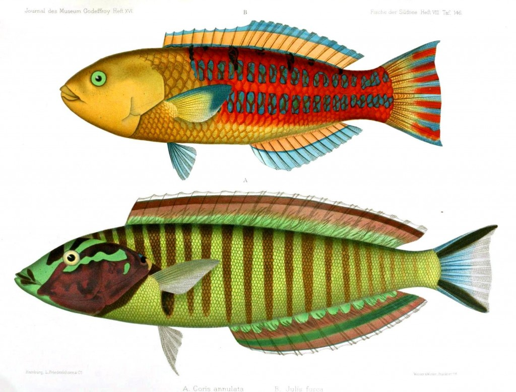 Animal - Fish - Red, Green 2