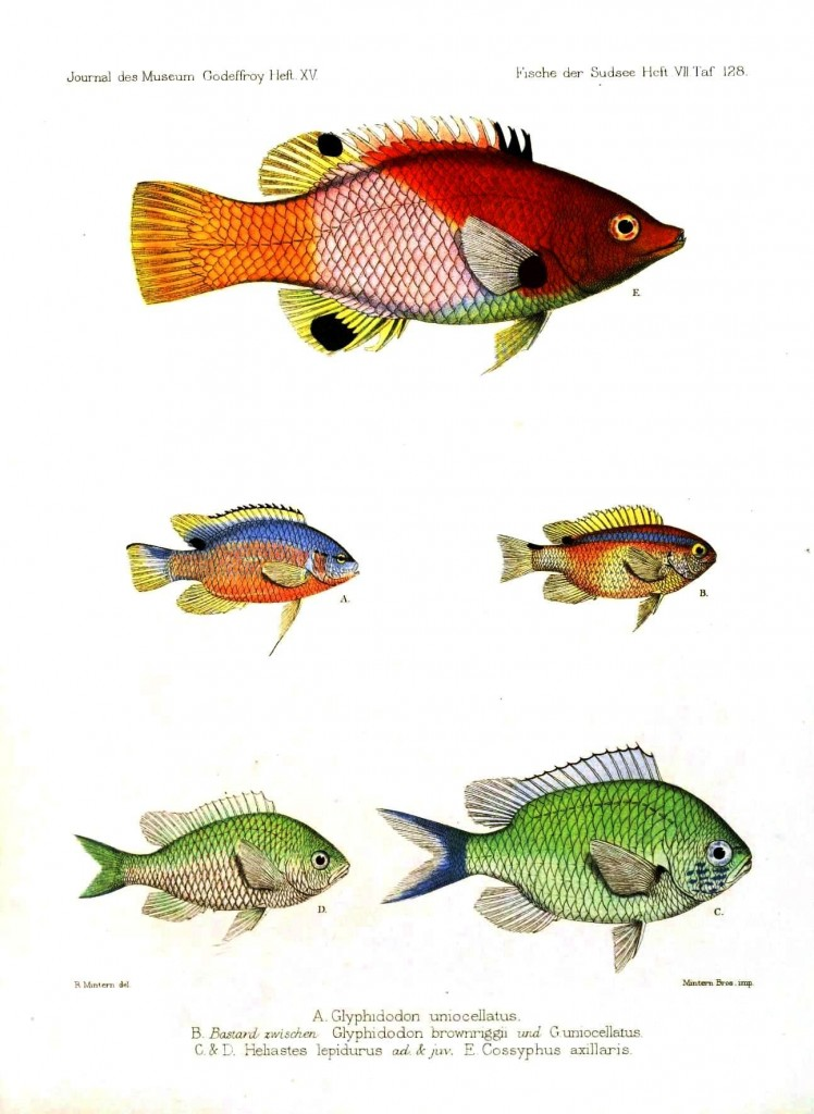 Animal - Fish - Red, Green