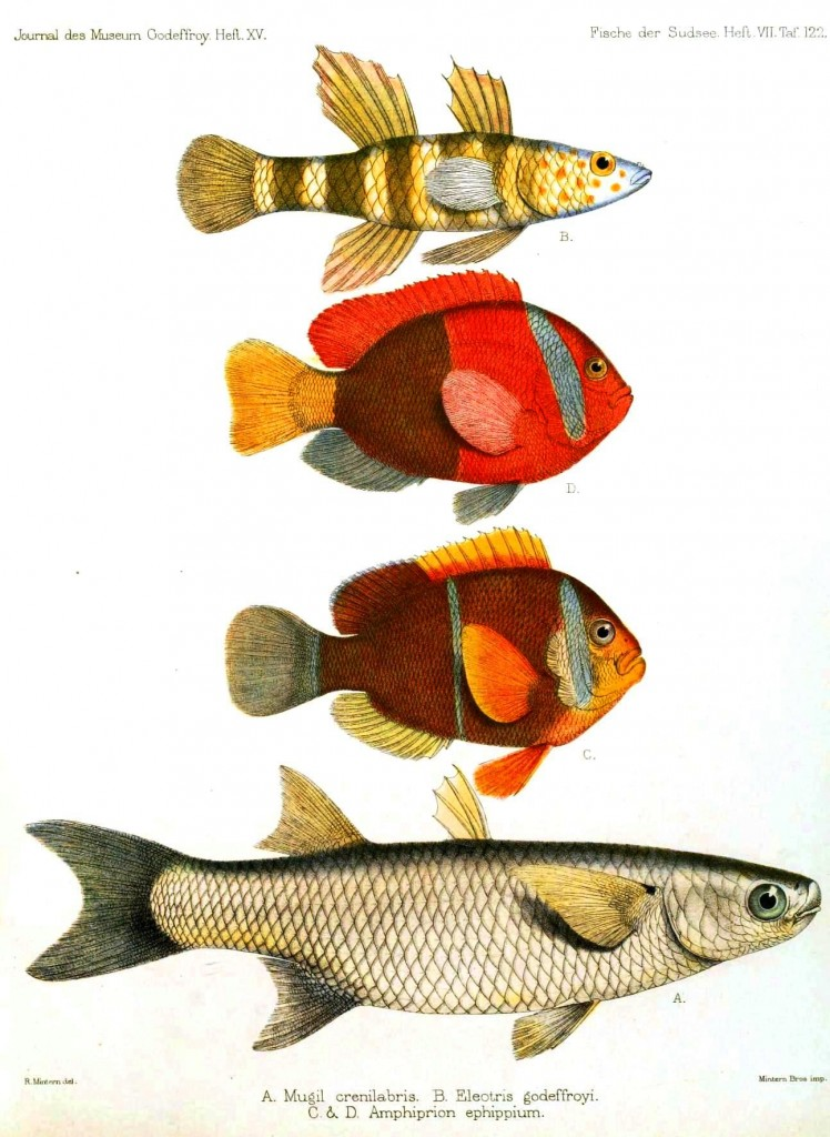 Animal - Fish - Red and orange fish