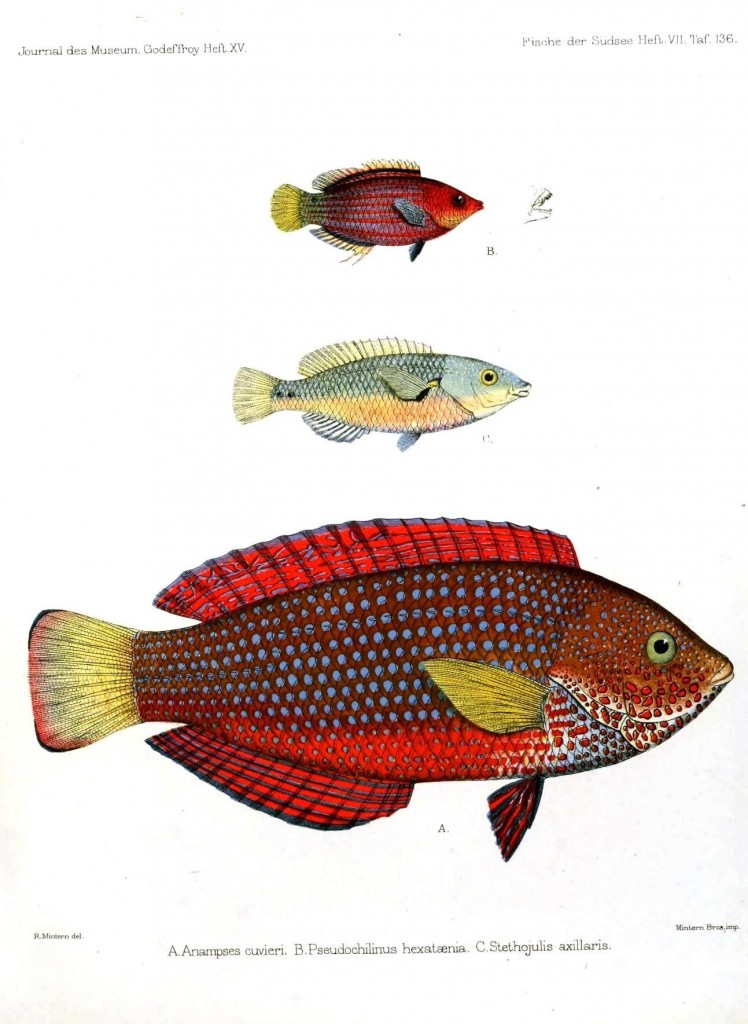 Animal - Fish - Red spotted