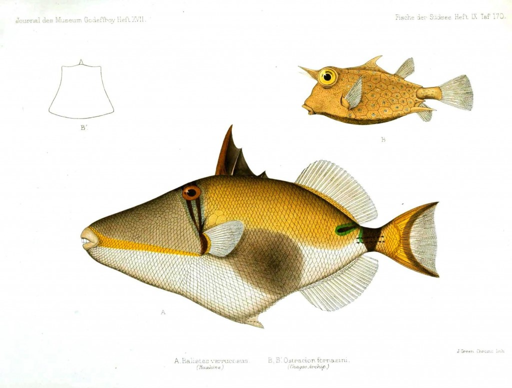 Animal - Fish - Yellow geometric