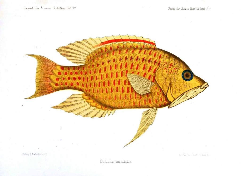 Animal - Fish - Yellow spotted