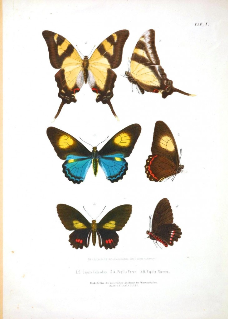 Animal - Insect - Butterflies - Educational plate