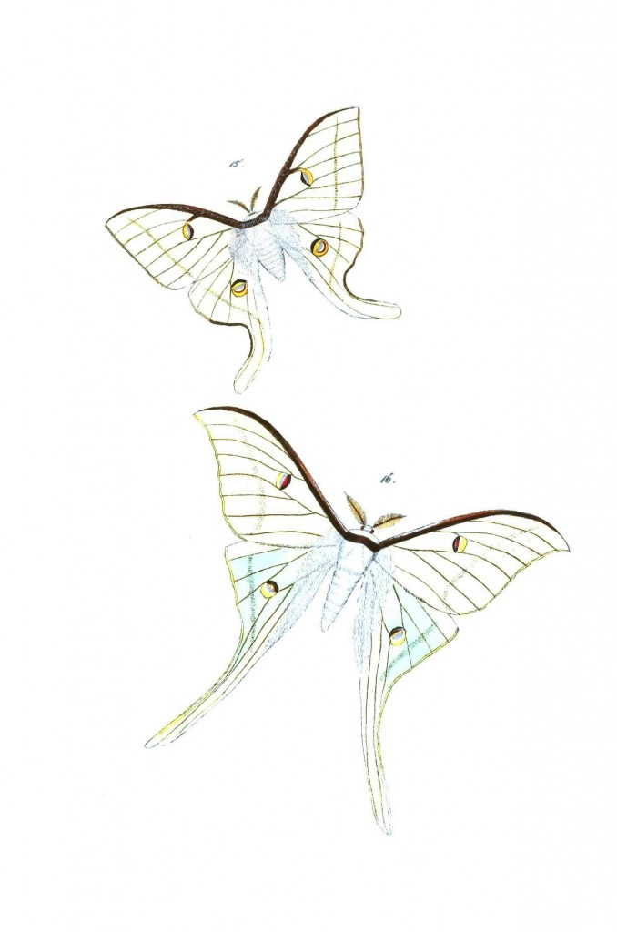 Animal – Insect, Butterfly | Vintage Printable at Swivelchair Media ...